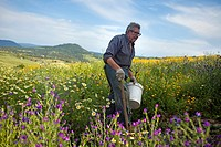 Small farmer picking horse manure that he uses as a natural fertilizer in an organic farm in Prado del Rey, Cadiz, Andalusia, Spain. In his farm he pr...