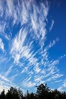 Cirrus fibratus clouds, Finland.
