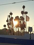 marking buoys in morning sun.