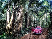 Road in the peruvian amazon with cars.
