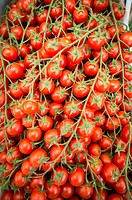 Rome, Italy- Vine tomatoes for sale in Campo de' Fiori, the largest and oldest outdoor market in Rome. It is located south of Piazza Navona.