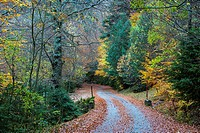 Road in Selva de Oza beechwood (Fagus sylvatrica), Valle de Hecho, Valles Occidentales Natural Park, Pyrenees Mountains, Huesca province, Aragon, Spai...