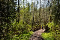 Hiker (Model Release 20020923-10) and dog (Miniature Golden doodle) on the Lime Kiln Trail near Granite Falls, Washington State, USA, which is partial...