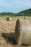 Hay bales in the Union Flat Creek valley in Whitman County in the Palouse, Washington State, USA with a farm in the background.