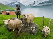 Rams of the local breed Faroes near Elduvik located at fjord Funningsfjordur. The island Eysturoy one of the two large islands of the Faroe Islands in...