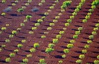 Aerial view of fields, Mallorca field, Balearic Islands, Spain.