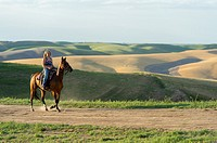 A teenage girl riding a horse on a ridge in the fields in Whitman County in the Palouse, Washington State, USA.