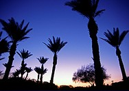 Twilight at Palm Springs California