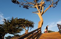 Carmel California old tree and steps to beach abstract in exclusive city sunset color.