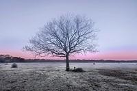 Balmer Lawn in sunrise, Brockenhurst, New Forest, Hampshire, England, UK.