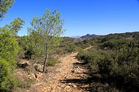Pathway through upland mountain landscape near Xalo or Jalon, Marina Alta, Alicante province, Spain
