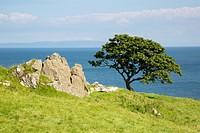 Rock and Tree, Murlough Beach; County Antrim; Northern Ireland.