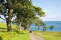 Tree Lined Road to Murlough Beach; County Antrim; Northern Ireland.