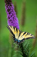 Butterfly on plant.