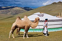 Mongolia, Uvs province, western Mongolia, nomad camp in the steppe.