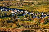 France, Cher 18, Chavignol village, vineyard in autumn.