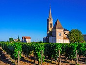"""France, Aquitaine, Gironde. """"""""Pomerol"""""""" , one of the famed Bordeaaux wunes district."""