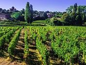 """France, Aquitaine, Gironde. """"""""Montagne Saint Emilion"""""""", one of the famed Bordeaux wunes district."""
