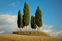 Tree circle surrounds a memorial cross on a hill outside San Quirico d'Orcia, Tuscany, Italy.