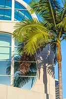 Close up of windown panes and palm trees at the San Diego Convention Center building. San Diego, California.