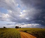 Poland. Suwalski region. Country road