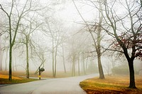 Curving paved country road on a foggy day in the winter with trees on both sides. Birmingham, Alabama, USA