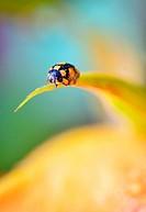 Details of ladybug on spring flowers.