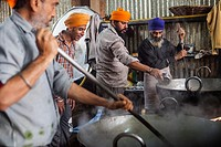 Volunteers cooking for the pilgrims who visit the Golden Temple, Each day they serve free food for 60,000 - 80,000 pilgrims, Golden temple, Amritsar, ...