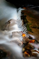 Autumn leaves on wet boulders in stream, with motion blur, Haute Savoie, France.