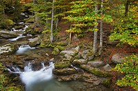 Autumn in the forest with colorful leaves and a mountainstream, Haute Savoie, France.