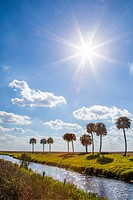Palm trees across water canal in south central Florida.